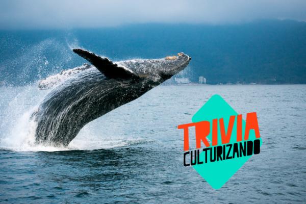 ¿Te gusta la fauna marina, en especial las ballenas? ¡Pon a prueba tus conocimientos con esta trivia!