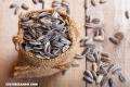 ¿Conoces los beneficios de las semillas de girasol?