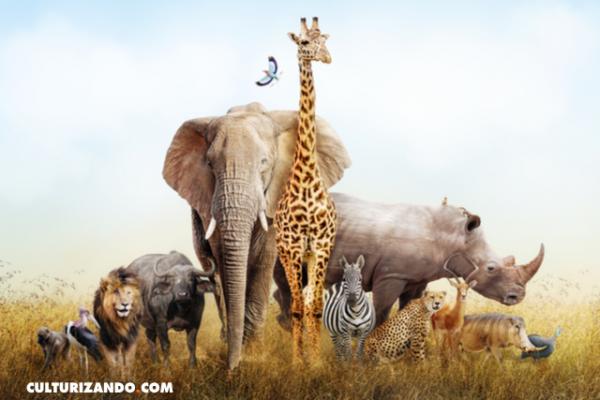 ¿Eres experto del mundo animal? ¡Esta trivia es para ti!