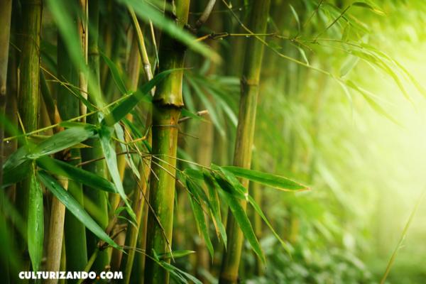 El helecho y el bambú: Una fábula de paciencia
