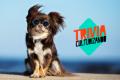 ¿Cuánto conoces sobre estos famosos perros?