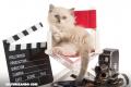 ¿Cuánto conoces sobre gatos que han aparecido en películas, series y dibujos animados?