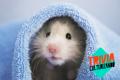 ¿Cuánto conoces sobre famosos roedores y su presencia en nuestras vidas?