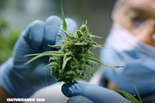 Energías limpias y renovables con el cannabis