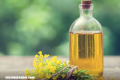 Conoce los beneficios del aceite de canola