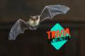 Trivia: ¿Cuánto sabes de animales que se alimentan de sangre?