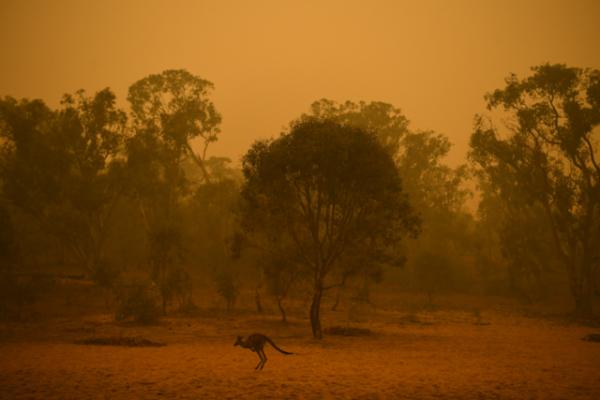 Australia en llamas: una catástrofe para la salud, la economía y la biodiversidad