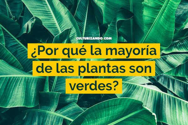 Por qué la mayoría de las plantas son verdes