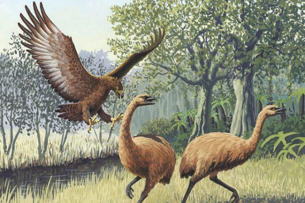 El águila mitológica con garras de tigre que realmente existió