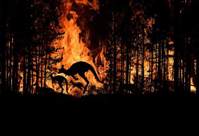 animales peligro extincion incendios australia