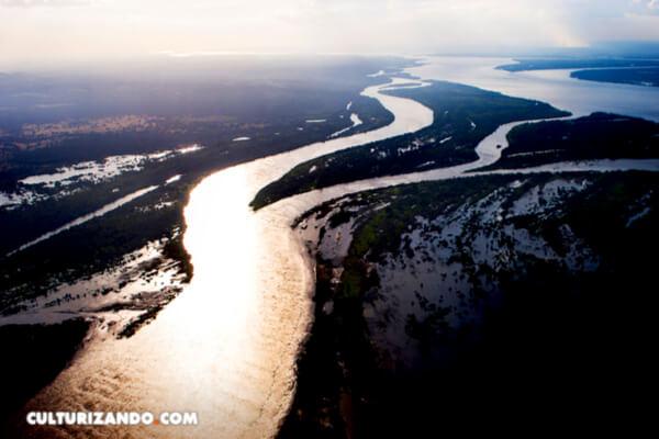 Conoce el pez del río Orinoco con nombre de cantante