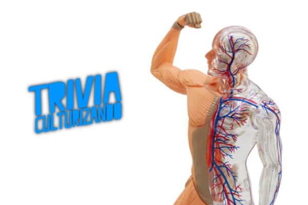 ¿Qué tanto sabes sobre el cuerpo humano? ¡Demuéstralo en esta trivia!
