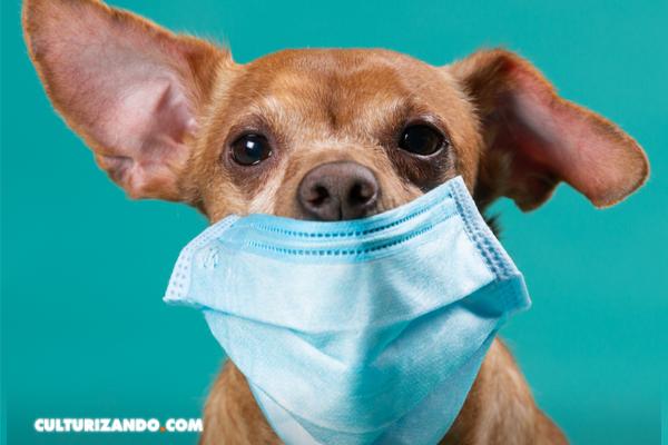 """""""No hay evidencias suficientes para pensar que los animales que se infectan contagien al humano"""""""