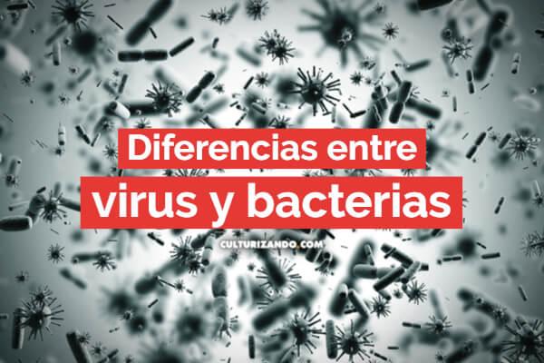 ¿Conoces las diferencias entre un virus y una bacteria?