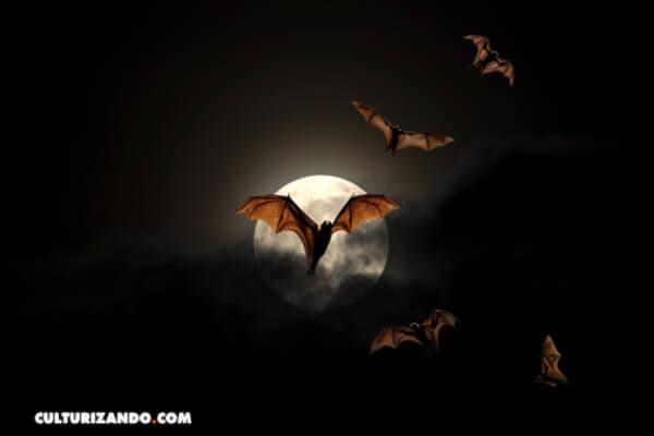 Murciélagos: 10 Interesantes datos que no sabías sobre estos animales