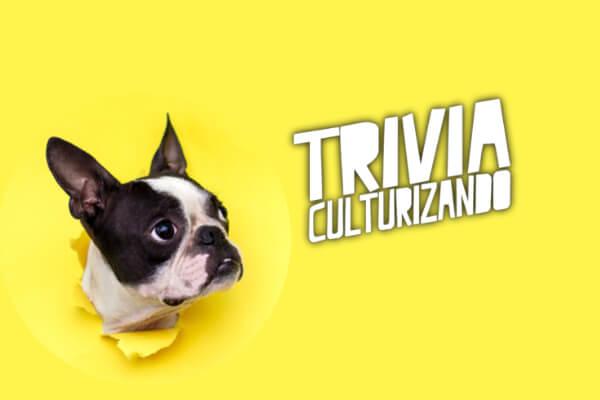 Trivia: ¿De cuáles países son emblema estos animales?