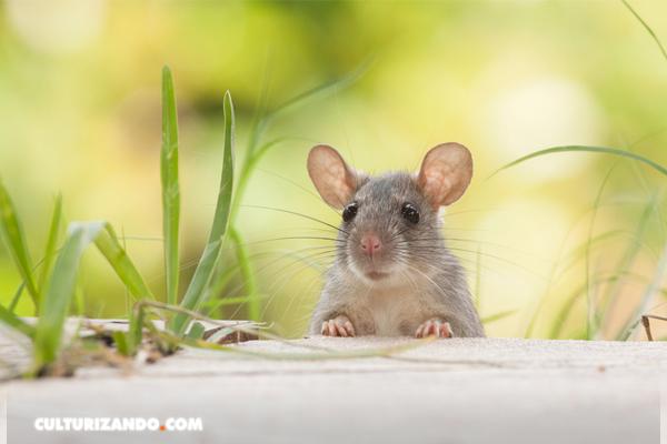 Algunos animales pueden identificar el ritmo musical