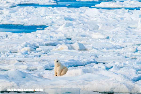 2020 añade un fenómeno extremo más a su calendario: el mayor agujero de la capa de ozono en el Ártico