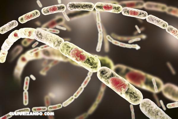 ¿Qué son las armas biológicas? Un recorrido por su utilización a lo largo de la historia bélica