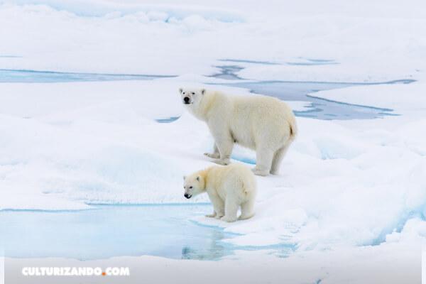 Una ola de calor extremo afecta el Ártico con una posible temperatura récord de hasta 38°C y voraces incendios