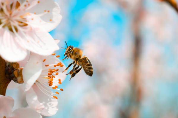 Conoce 5 datos sorprendentes de las abejas