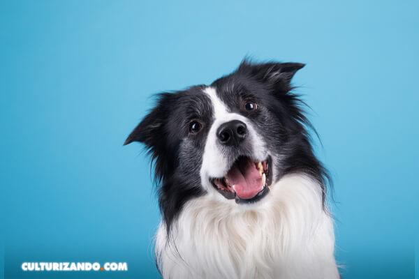 ¿Es verdad que los perros solo ven en blanco y negro?