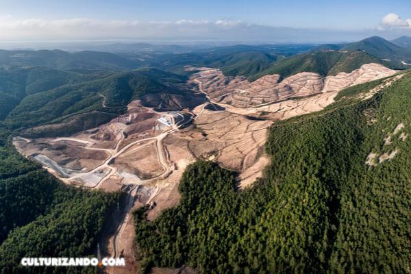 La deforestación disminuye, pero no al ritmo suficiente para proteger al planeta