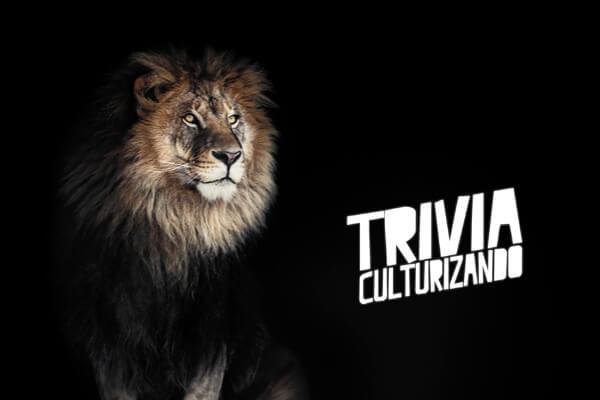 Trivia: ¿Qué tanto conoces a los leones?