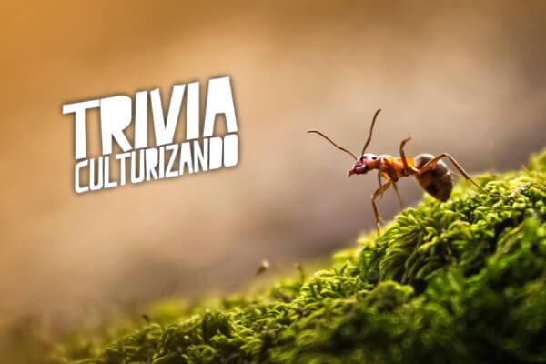 ¿Cuánto sabes de las hormigas? ¡Resuelve esta trivia!