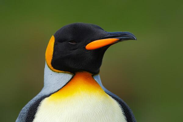 Un pingüino es miembro de la Guardia Real de Noruega