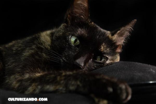 La leyenda de las gatas carey, ¿la conoces?