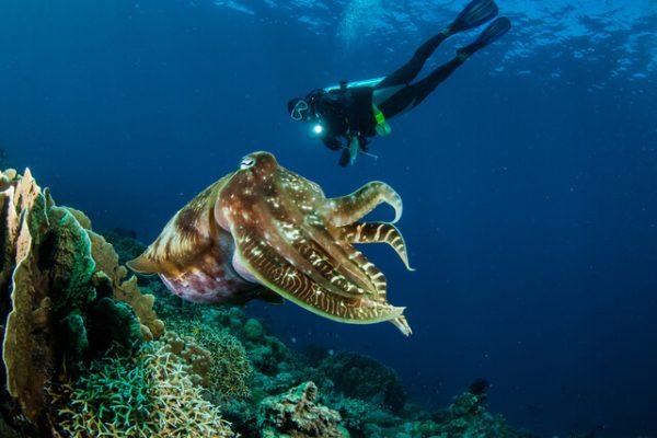 5 datos sorprendentes del calamar gigante