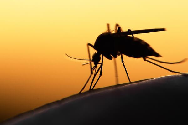 5 curiosidades que no conocías de los mosquitos