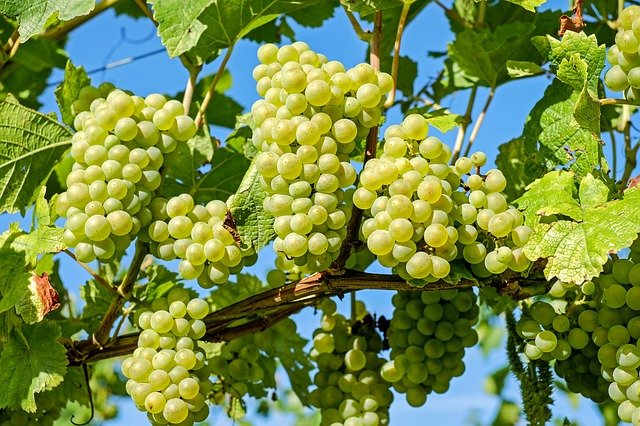 12 uvas en Nochevieja. Las uvas de la suerte.