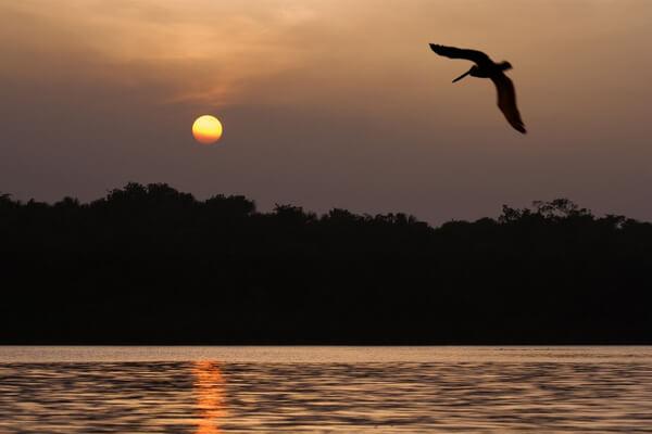La hidra del río Orinoco: ¿conoces esta leyenda indígena?
