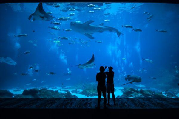 ¡Trivia Marina! ¿Qué tanto sabes de las criaturas del mar?