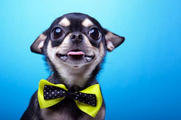 ¿Sabías que un perro estuvo nominado a un Oscar?