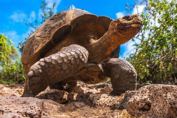 El Archipiélago de Galápagos, un paraíso de diversidad y descubrimientos