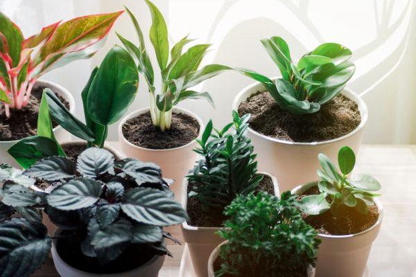 Conoce algunas de las plantas ideales para purificar el aire